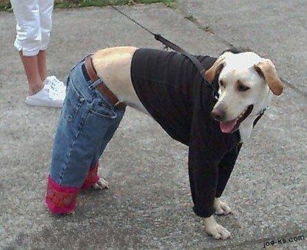 DogWear07