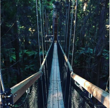 Redwood TreeWalk Rotorua